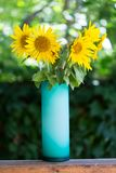 Sunflowers in a glass vase. Royalty Free Stock Photos
