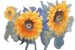 Sunflowers on green background watercolor isolated. A watercolor drawing of three bright golden sunflowers with green leaves, on blue background, vintage style Royalty Free Stock Photography