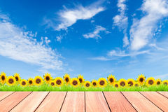 Sunflowers with green grass against blue sky background and plank wood. Foreground Royalty Free Stock Photo