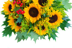 Sunflowers with green leaves Stock Image