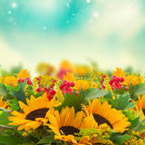 Sunflowers with green leaves Stock Images