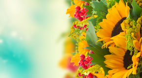 Sunflowers with green leaves Stock Photo