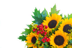 Sunflowers with green leaves Stock Photos