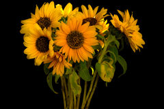 Sunflowers group Stock Photography