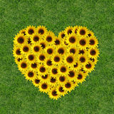 Sunflowers in a heart shape Stock Images