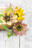 Sunflowers (Helianthus) Royalty Free Stock Images