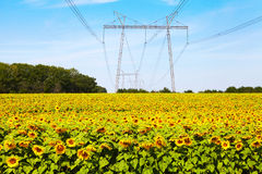Sunflowers and high-voltage line Royalty Free Stock Images