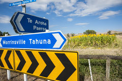 Sunflowers by highway in Waikato. Stock Images