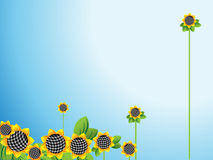 Sunflowers  horizontal Royalty Free Stock Photos