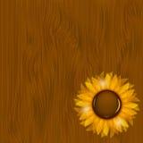 Sunflowers illustration background illustration Stock Photography