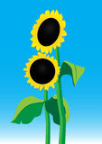 Sunflowers. Illustration of sunflowers on a background of sky Royalty Free Stock Photos