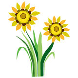 Sunflowers Illustration. This is a vector illustration of Sunflowers Royalty Free Stock Image