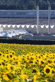 Sunflowers and industry Stock Photography