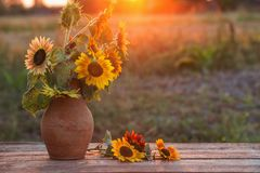 Sunflowers in jug on wooden table at sunset. The sunflowers in jug on wooden table at sunset Royalty Free Stock Image