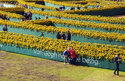Sunflowers labyrinth Stock Photos