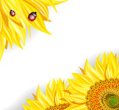 Sunflowers and ladybirds Royalty Free Stock Images