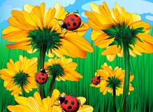 Sunflowers and ladybugs Stock Photo