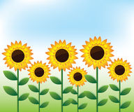 Sunflowers landscape background Royalty Free Stock Photography