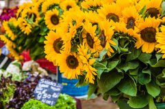 Sunflowers at the local farmer's market Stock Photo