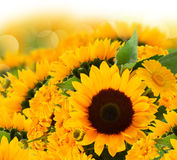 Sunflowers and marigold flowers bouquet Stock Photo