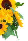 Sunflowers and marigold flowers close up. Details isolated on white background Stock Images