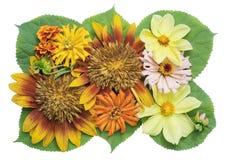 Sunflowers mix Royalty Free Stock Photos
