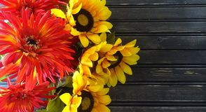 Sunflowers and mums with wooden background. Autumn decor. Sunflowers and mums with wooden background. Space for text royalty free stock photos