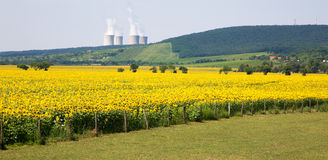 Sunflowers and nuclear power plant Stock Image