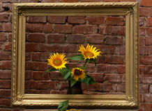 Sunflowers and old frame Stock Images