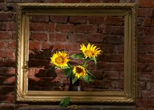 Sunflowers and old frame Stock Photos