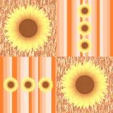 Sunflowers on orange stripes Stock Photography