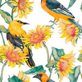 Sunflowers and oriole pattern watercolor. Exotic bird. Watercolor. Vector. Stock Photos