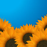Sunflowers over blue. Background illustrtion Stock Photo