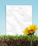 Sunflowers and paper frame Royalty Free Stock Photography