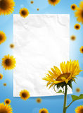 Sunflowers and paper frame Royalty Free Stock Image