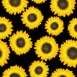 Sunflowers pattern Royalty Free Stock Photo