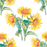 Sunflowers pattern watercolor. Stock Photography