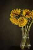 Sunflowers. Picture of sunflowers in a vase Stock Photos
