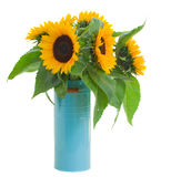 Sunflowers in pot Stock Photography