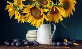 Sunflowers and purple plums. flowers and fruit. Still life with a bouquet in a jug royalty free stock photos