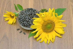 Sunflowers and ripe seeds close-up. horizontal photo. stock photos