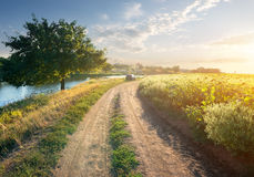 Sunflowers and river Stock Photography