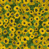 Sunflowers. Seamless background with yellow flowers. Sunflowers Royalty Free Stock Photo