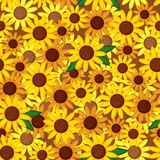 Sunflowers seamless pattern Stock Images