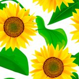 Sunflowers Seamless vector pattern. Autumn print. flowers and leaves, For textile, decoration, packing, wrapping,. Banner for oil product, cooking, advertising Royalty Free Stock Photo