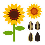 Sunflowers and seed symbol Royalty Free Stock Photo