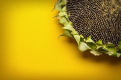 Sunflowers and seeds in bowl on  background. Sunflowers and seeds in bowl on yellow background Royalty Free Stock Photo