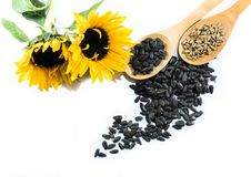 Sunflowers, seeds and wooden spoons on a white background Stock Photo