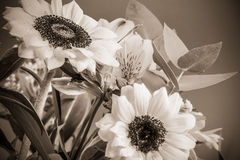 Sunflowers in sepia colors. Vintage flower photo. Stock Photo
