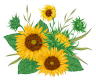 Sunflowers set. Collection decorative floral design elements for wedding invitations and birthday cards. Stock Images
